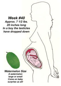 Baby Development In Womb: 40 Weeks Pregnant