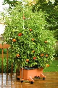 EarthBox-Tomato-TRC-201x300