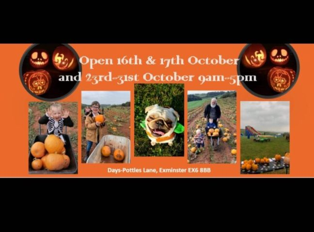Days Pottles Lane pick your own pumpkin