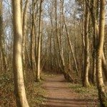 Woodland walking path, Bittern Trail, Chew Valley Lake