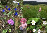 Identifying Swiss wild flowers - 30 Days Wild