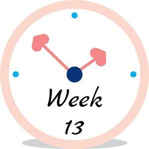 Zwangerschap week 13