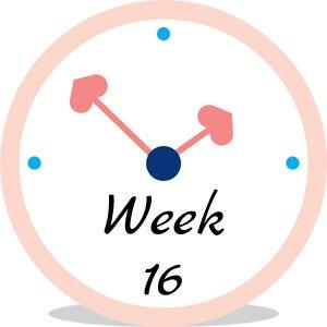 Zwangerschap week 16