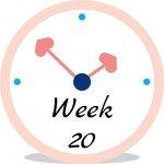 Zwangerschap week 20