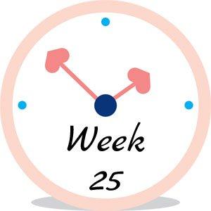Zwangerschap week 25