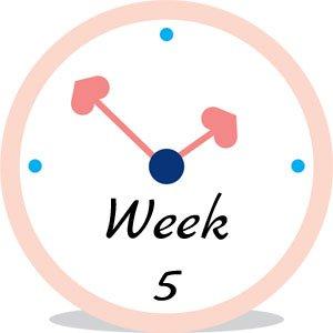 Zwangerschap week 5