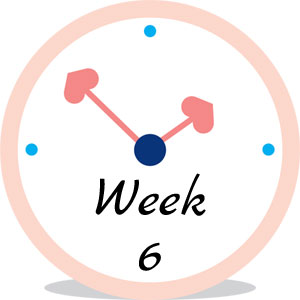 Zwangerschap week 6