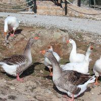Granja para ir con niños en la Sierra de Guadarrama