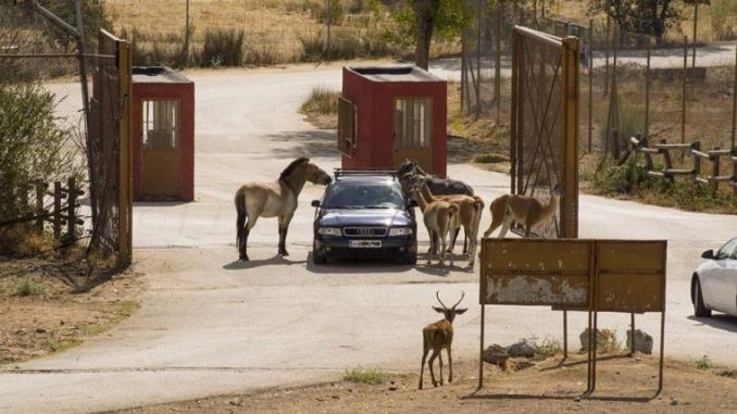 Safari Madrid
