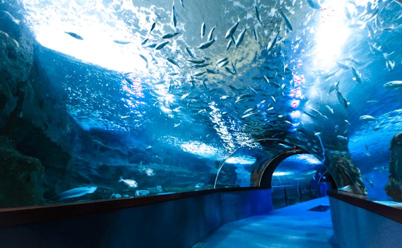 Aquarium de Bilbao