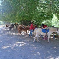 Restaurante  con mini granja y paseos en poni para niños
