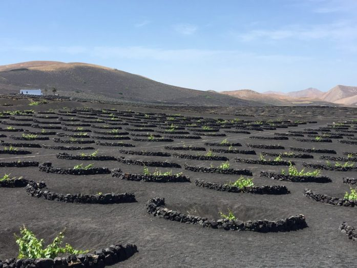 Lanzarote Wine Making