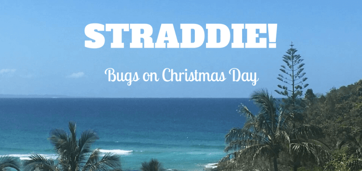 Eating Bugs on Straddie at Christmas