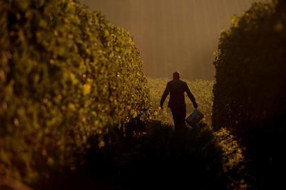 Oregon winery vineyards