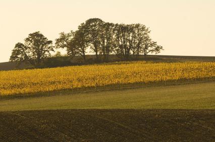 Larkins-Estate-Fall-shot-2