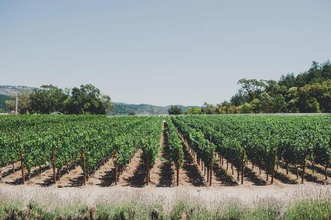 Madrigal-Vineyards-156