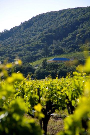 SFV_Winery+Vineyard
