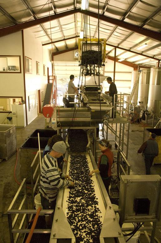 Dobbes Family Estate Grape Sorting line