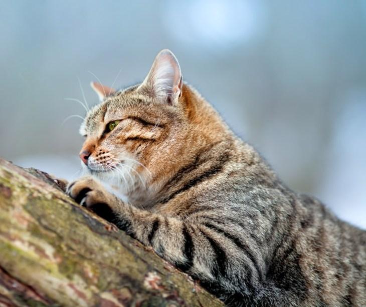 original englische Bio Bachblüten für Katzen