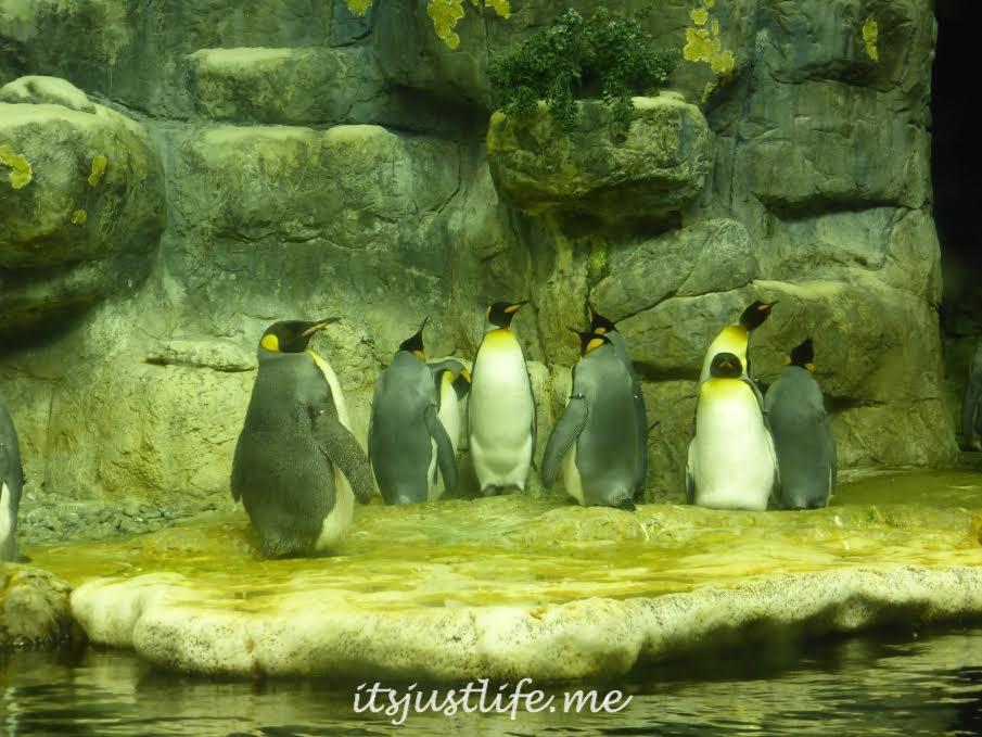 Penguins at itsjustlife.me