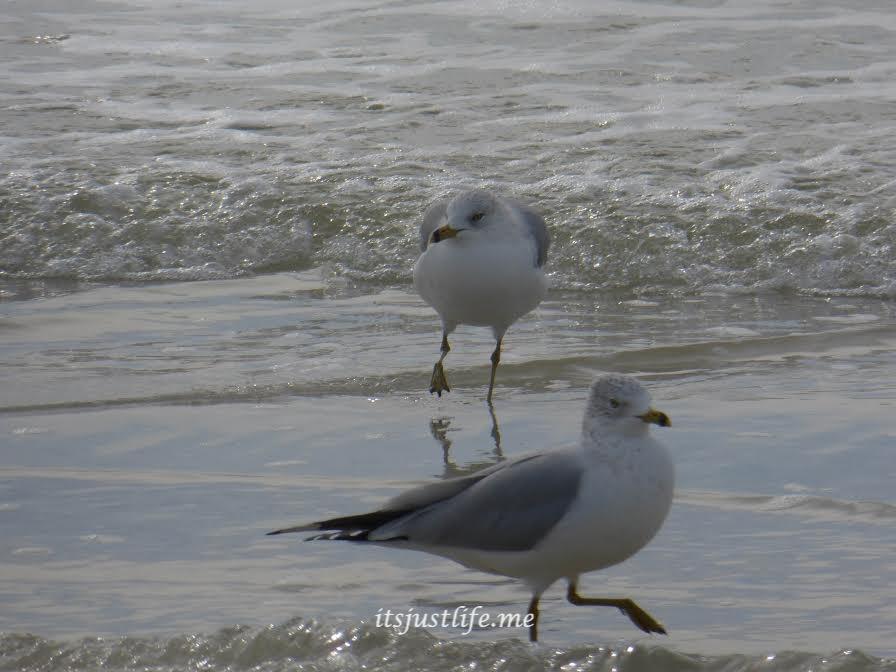 seagulls on itsjustlife,me
