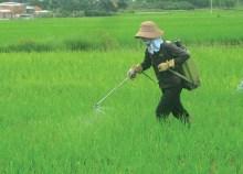 90% nông dân không có kiến thức khi dùng thuốc bảo vệ thực vật