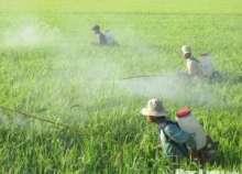 Việt Nam chi gần 300 triệu USD nhập thuốc trừ sâu Trung Quốc