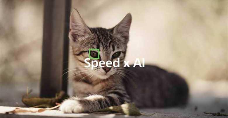 ทาสแมวถูกใจ Sony a6400 เฟิร์มแวร์ใหม่ รองรับ Eye-AF ดวงตาสัตว์ - ทาสแมวถูกใจ Sony a6400 เฟิร์มแวร์ใหม่ รองรับ Eye-AF ดวงตาสัตว์