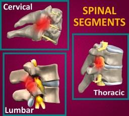 Spinal Segments