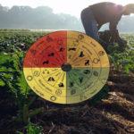 Биодинамичното земеделие на Рудолф Щайнер