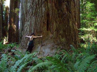 прегръщане на дърво