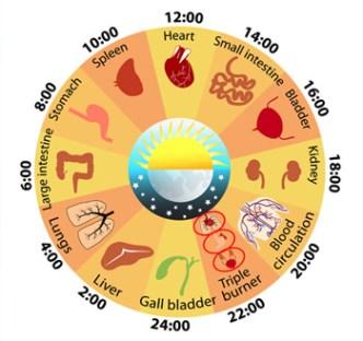 body-clock-fi02