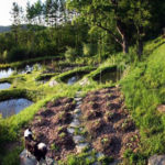 Как да създадем градина гора – Ръководство стъпка по стъпка