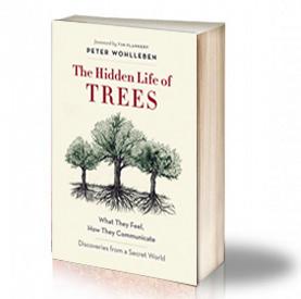 Book Cover: The Hidden Life of Trees - Peter Wohlleben