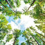 Десет начина да чуеш дърветата
