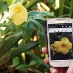 """""""Shazam"""" за флората ще разпознае всяко растение от снимка"""