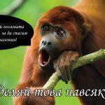 Спри корупцията убиваща Амазония