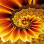 20 растения, които разкриват свещената геометрия в цялата й прелест (+видео)