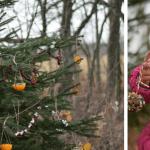 Сподели празниците! Украсете дръвче с ядлива декорация за птичките и животинките
