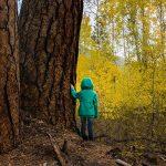 За горите и хората