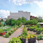 Споделена градина или как да пуснем корени в квартала