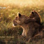 3-ти март Световен ден на дивата природа – Големи котки: Хищници под заплаха