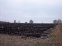 First Planting in 2012