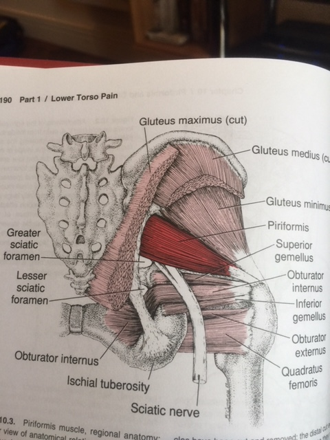 piriformis location