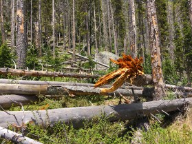 evidence of all the tree fall