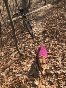 Backcountry K-9 Training mountain bike dog