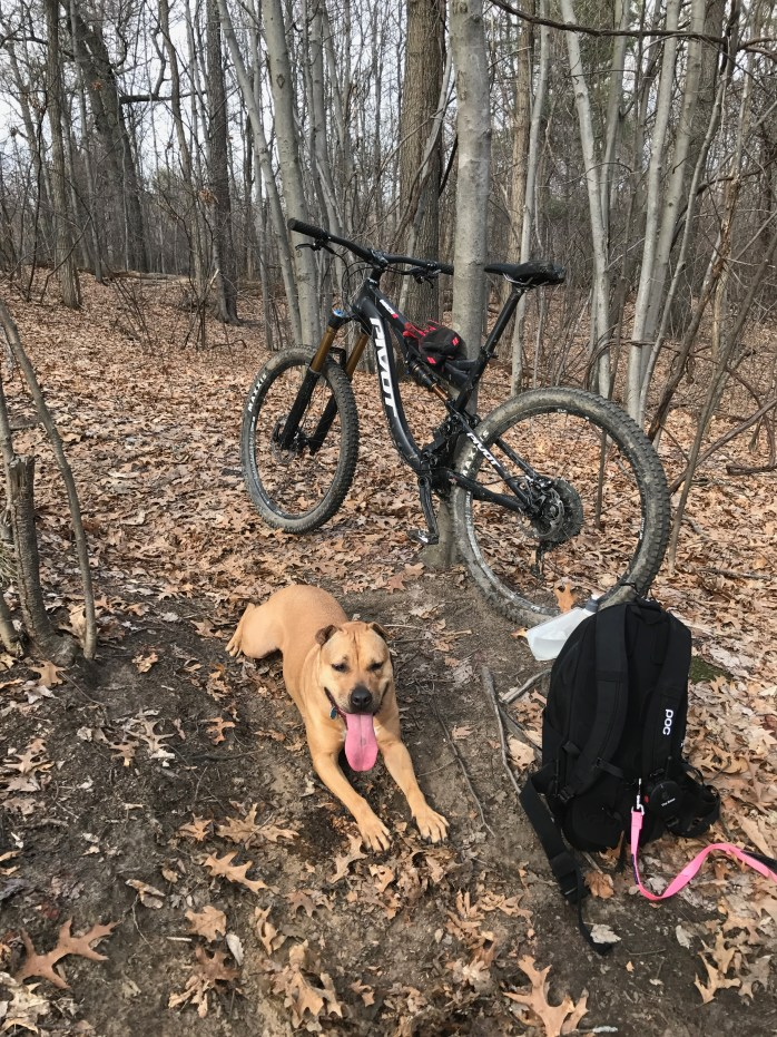 Mountain Bike Dog Training
