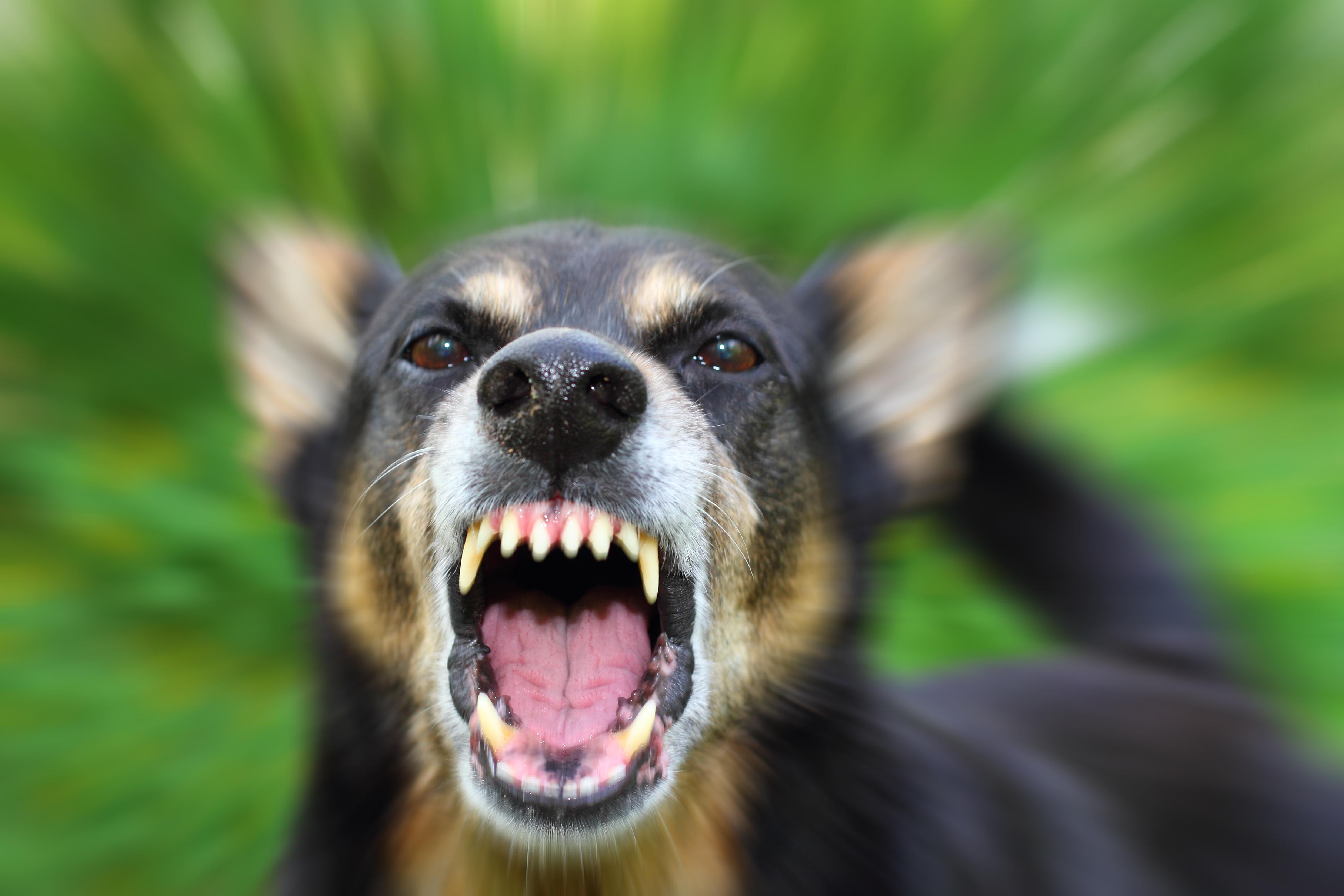 Dog Aggression Help