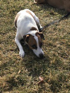 Dog training Danbury CT