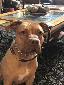 Dog Training in New Rochelle NY